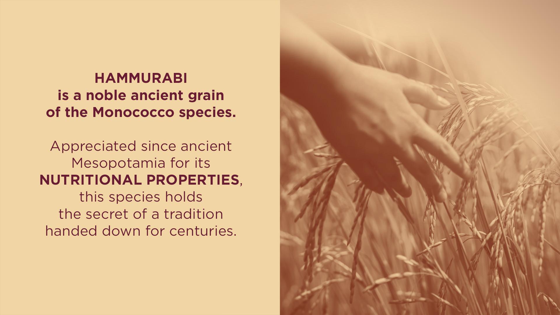 Hammurabi-Rba-Design-002